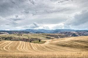 dayto-fields